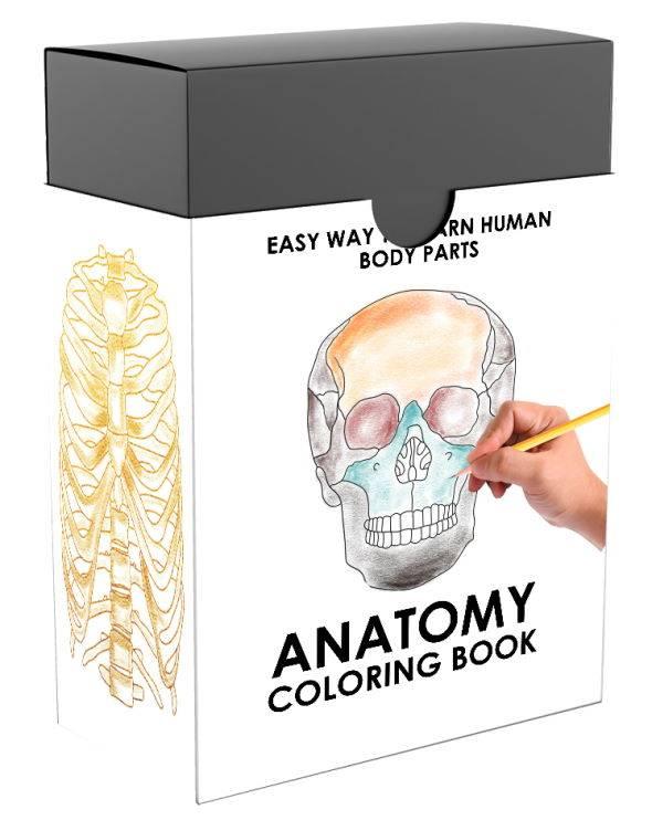Anatomy Coloring Book - PlrHero.com